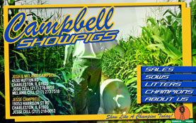 New Site: Campbell Show Pigs