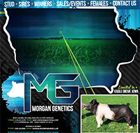 New Site: Morgan Genetics