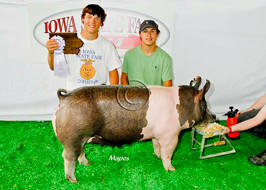 Iowa State Fair Showpig Results