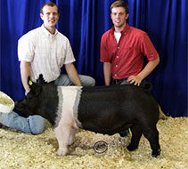 Madison County Jackpot Showpig Results
