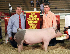 Purdue Block and Bridle Show Pig Results