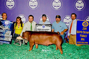 Michigan Livestock Expo Showpig Results