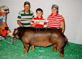 National Barrow Show Results
