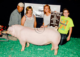 Team Purebred Gilt Show Results